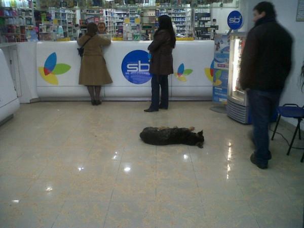 Un perro durmiendo en medio de una farmacia | Manuel Rebolledo