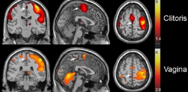El cerebro de las mujeres se activa de forma distinta según el área estimulada | Barry Komisaruk