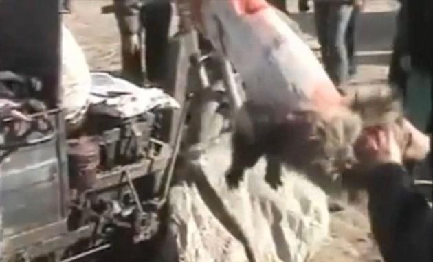 Trabajadores chinos desollan un mapache mientras sigue vivo