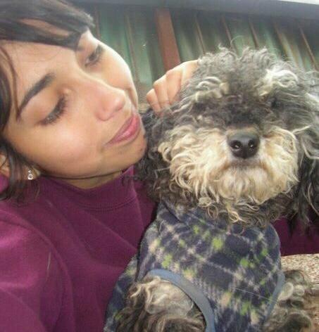Busco perrita mestiza poodle perdida en La Pintana | Natalia Muñoz Castillo