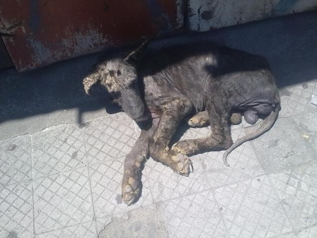 perritos en total abandono | laura ortega lara