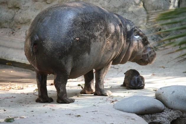 Buin Zoo