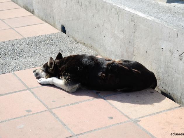 Abandono de perros en Lenga | Eduardo Reinoso