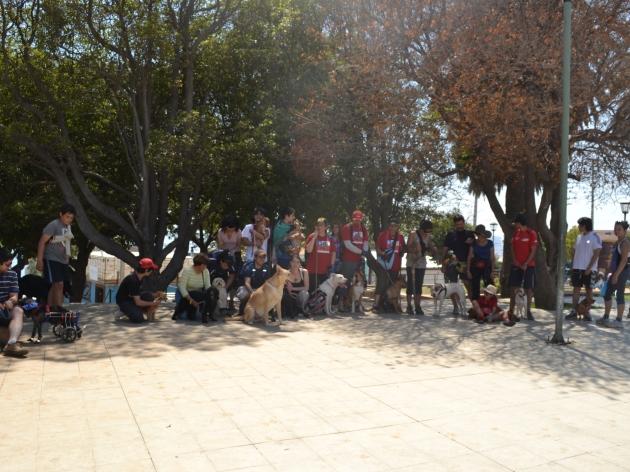 Dog Trekking   Cristian Pablo Duran Oyarzo