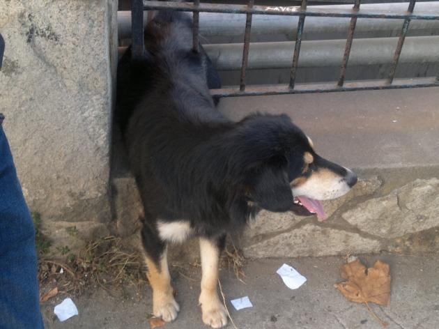 Bomberos rescatando a perrito | Claudio Ayala