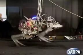 Robot 'Chita' desarrollado en EEUU