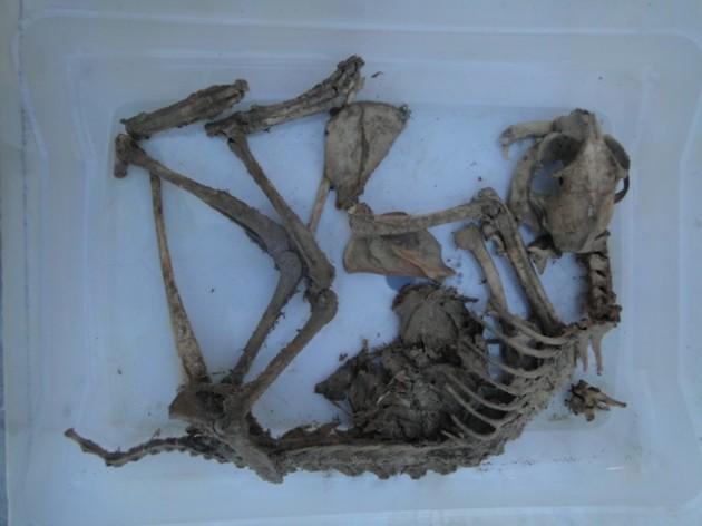 Esqueleto | José Aedo (RBB)