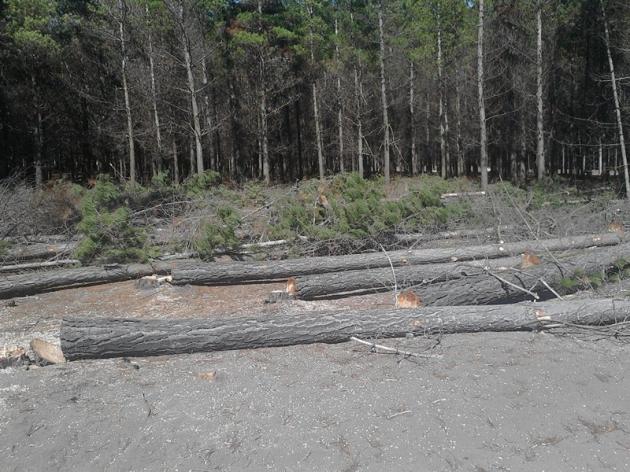 deforestación en san pedro de la paz | Sergio Kind