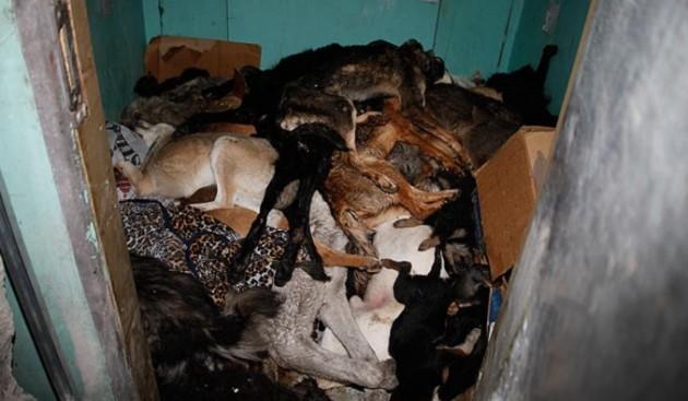 Matanza de perros en Ucrania | The Sun