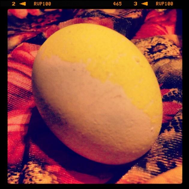 "La búsqueda del ""Huevo de Oro"" | Por Gabriela Ulloa (BBCL)"