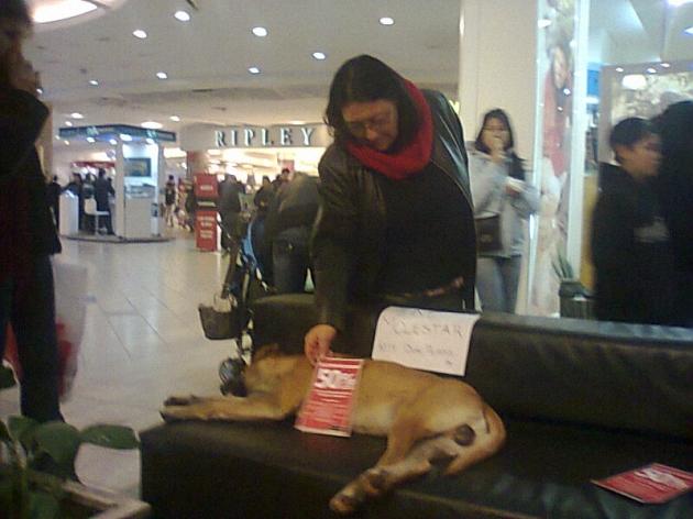 Perro en Mall Tobalaba | Ursula Neira