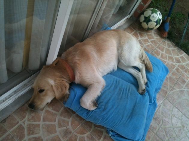 Perrito abandonado busca hogar   Michele Betancourt
