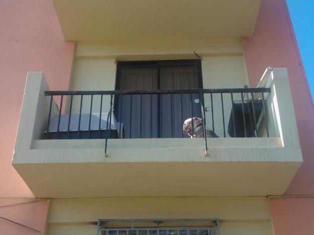 Perro en el balcón | César Arriagada