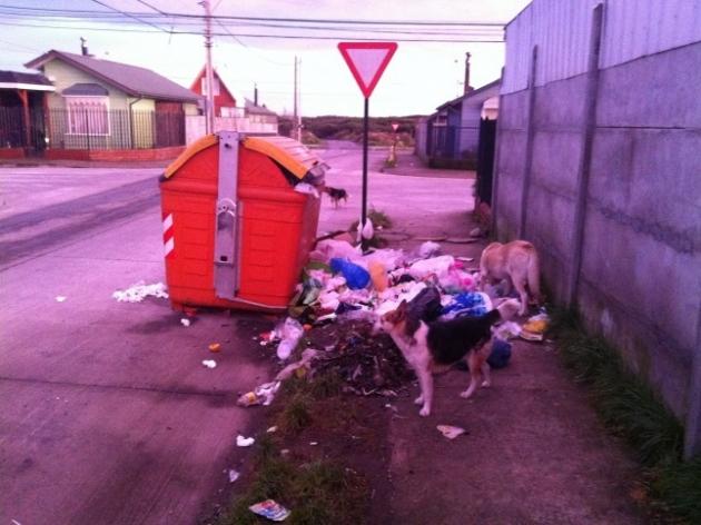 Basura en Calles | Felipe Altamirano