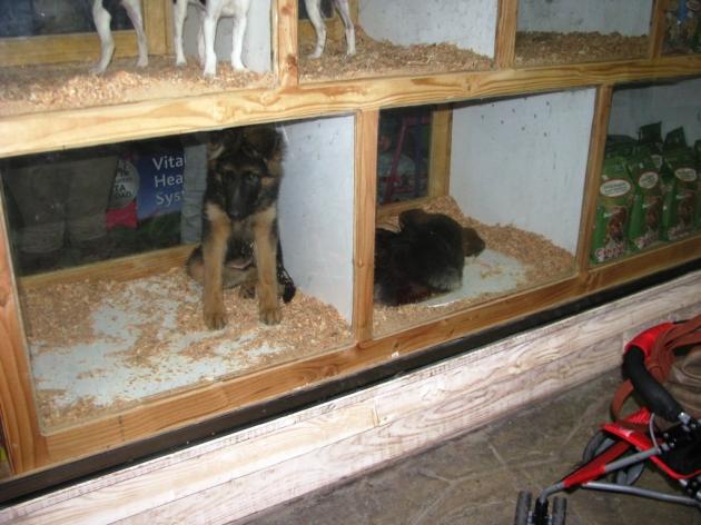 Cachorros en Vitrina......   Daniel Olave