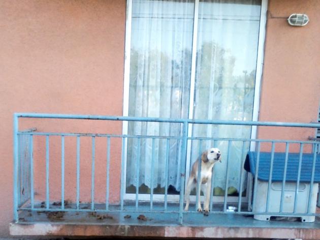 Indigna condiciones en que vive una perrita en condominio en Pudahuel | Loreto Acevedo