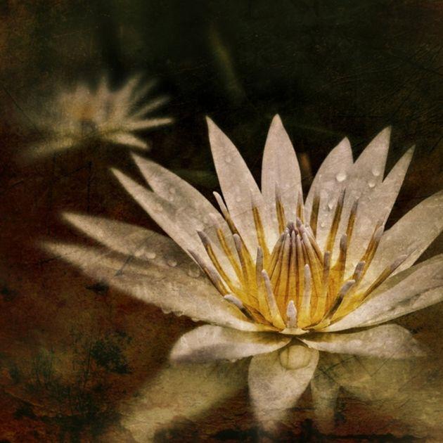 Water Lily | Adria Ellis