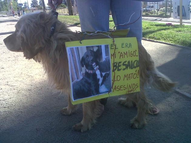 Perro en protesta | Rodolfo Francois