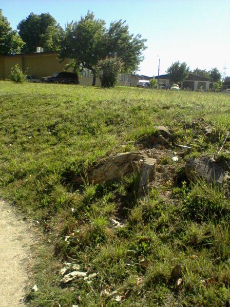 Denuncia de corte de árboles