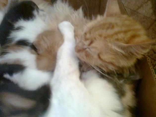 Dos gatas cuidan y amamantan juntas a sus crias   David Silva