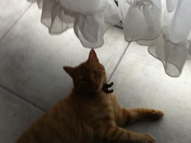 Se busca gatito perdido. | Alejandra Araneda