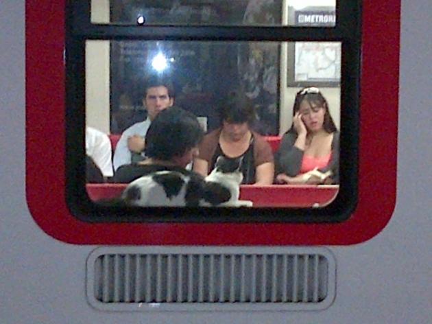 Un gato en el metro | Juan Carlos Bussenius