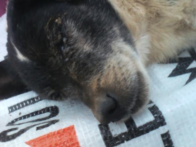 Denuncia por maltrato animal   Ivonne Molina