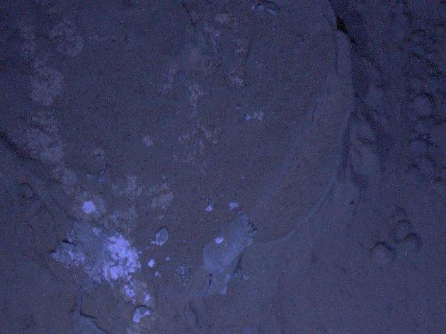 Roca marciana bajo luz ultravioleta | NASA