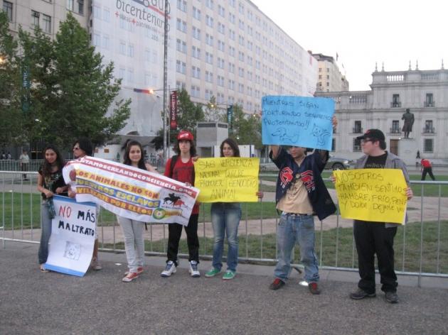 protesta en contra de la ley de caza   paz rebolledo