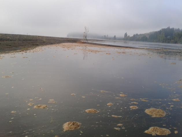 CMPC Laja vuelve a contaminar el rió Bio Bio   Gabriel Arriagada Rios