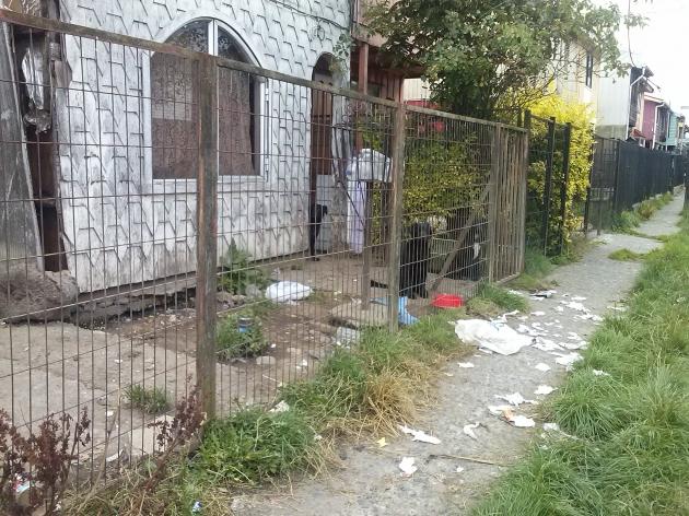 Abandono de Casa y animales | Juan Alberto Ojeda H.