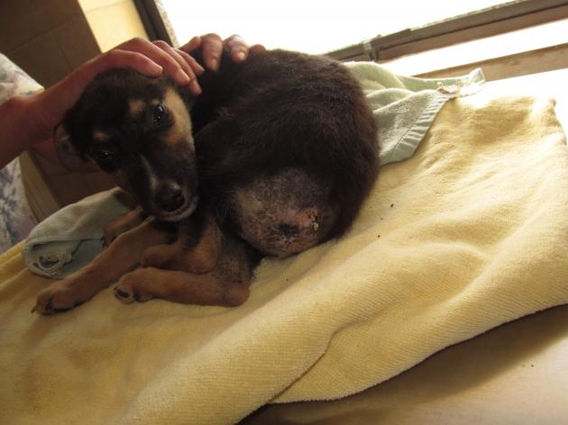Grave caso de maltrato animal en Hualpén, Concepción | César Ormeño