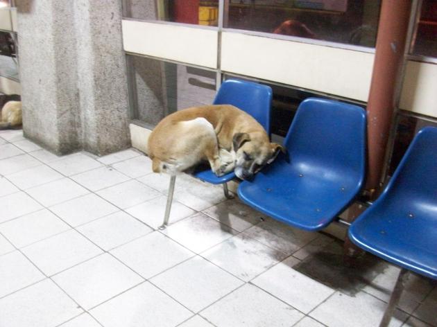 canes en terminal de buses | gonzalo ortiz