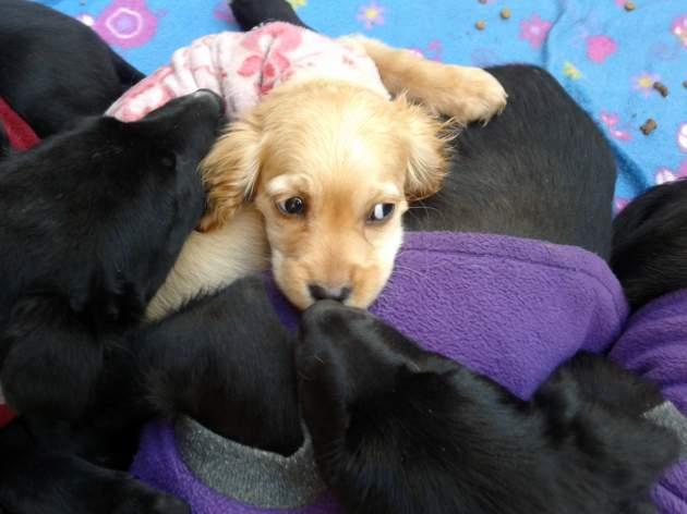 Perritos en adopción | Valeska Belmar (RBB)