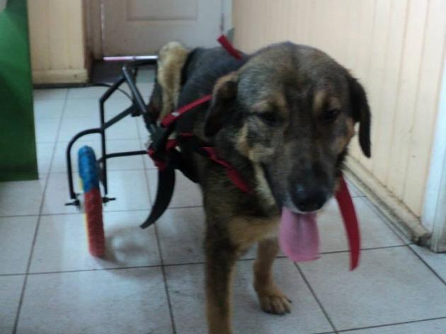 Perrito abandonado necesita hogar | Faviana Vargas