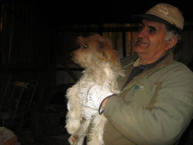 Perrito atropellado necesita ayuda | Faviana Vargas Alarcon