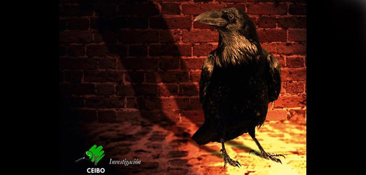 Detalle de la portada de El despertar de los Cuervos, Ceibo Ediciones