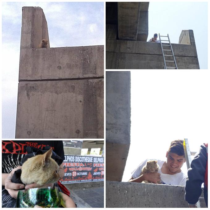 Rescatan a gato atrapado en el metro Macul | Ignacia González
