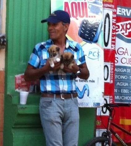 Hombre vende cachorros recien nacidos como perros enanos | Rodrigo Reyes