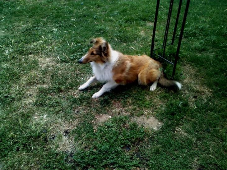 Perro perdido en Talcahuano | Renata Rodríguez