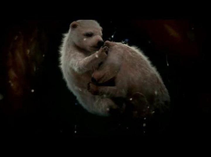 Osos polares   Imgur