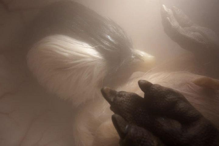 Pingüinos   Imgur