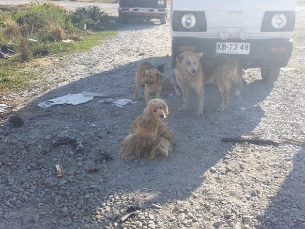Animales quedaron en total abandono | Constanza Morales