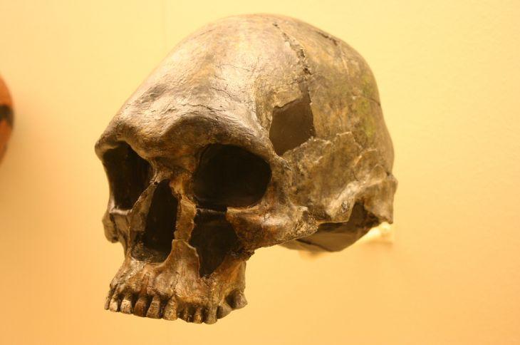 Homo Sapiens 13,000 a 9,000 años | Ryan Somma