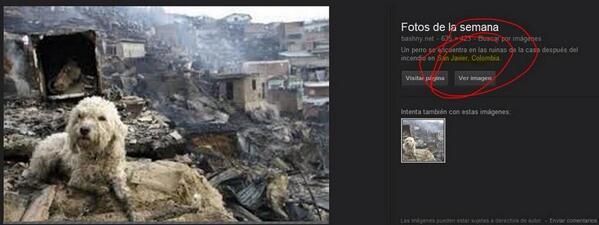 Imagen del perro | Reuters