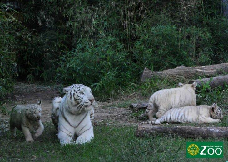 Zoo de Buenos Aires en Facebook
