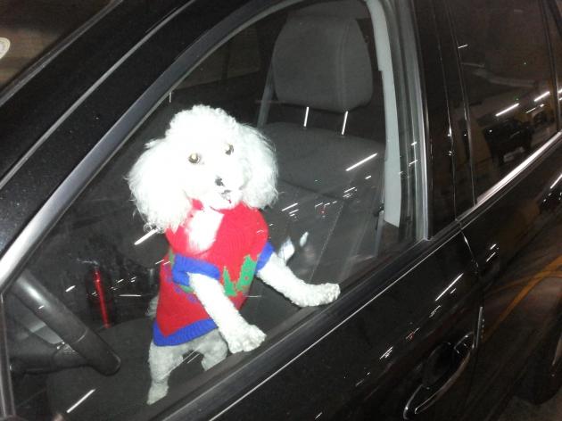 Mascota encerrada en vehículo | César Saldías