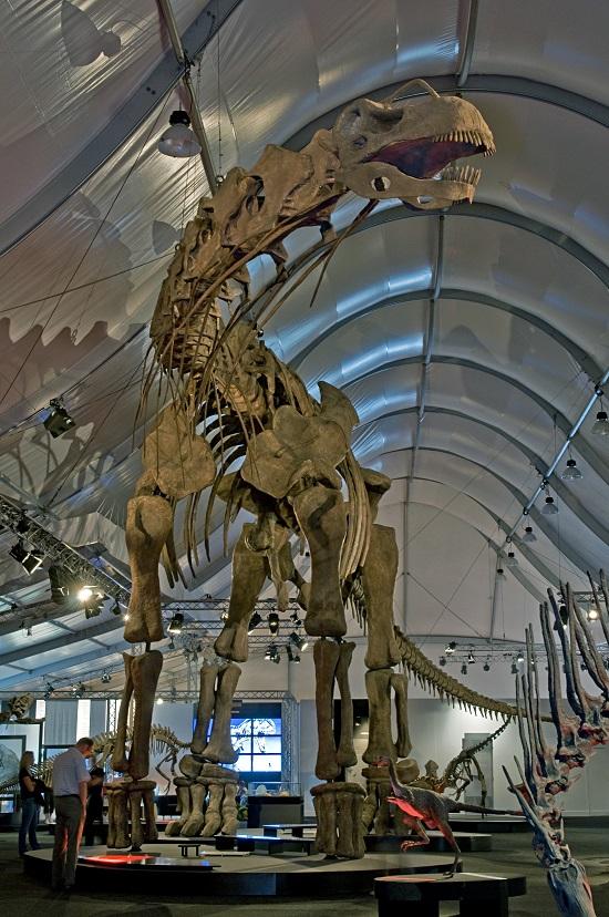 Réplica del argentinosaurio   Eva K. (cc) en Wikipedia