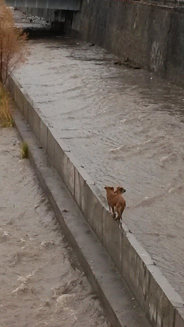 Perritos en río Mapocho | Patricio Melendez