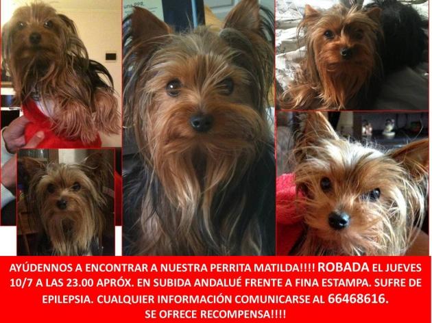 Ayúdenos a encontrar a Matilda | Carolina Lagos